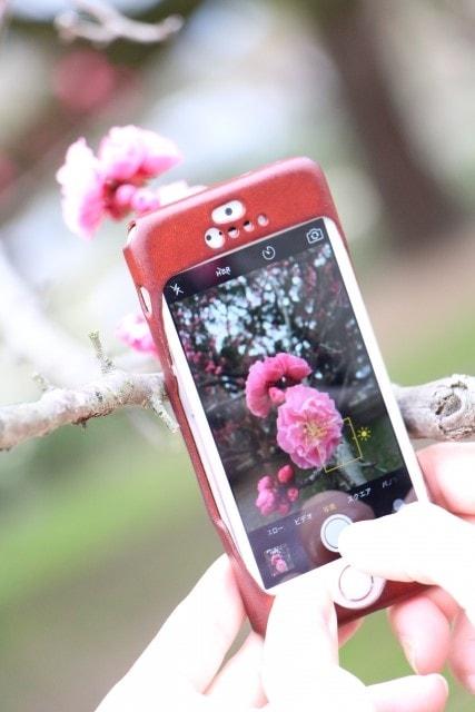 お花を写真撮影